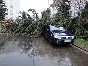 Spadlý strom v hradecké ulici K Sokolovně.