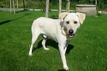 Kříženec: jméno: Aran, pohlaví: pes, věk: 3 roky, barva: krémová, velikost v kohoutku: 50 cm. Je skoro slepý. Orientaci se naučí v prostředí domku se zahradou. Přátelský, temperamentní, vyrovnaný a vděčný za projev náklonnosti.