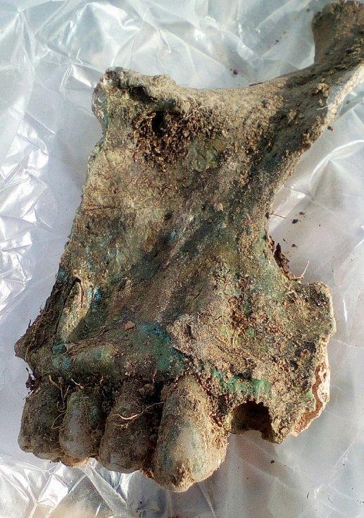 Muž našel pomocí detektoru kovů u Máslojed na Hradecku hrob vojáka z prusko-rakouské bitvy u Sadové roku 1866.