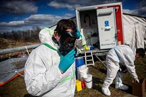 Likvidace kachen nakažených ptačí chřipkou v Dobřenicích