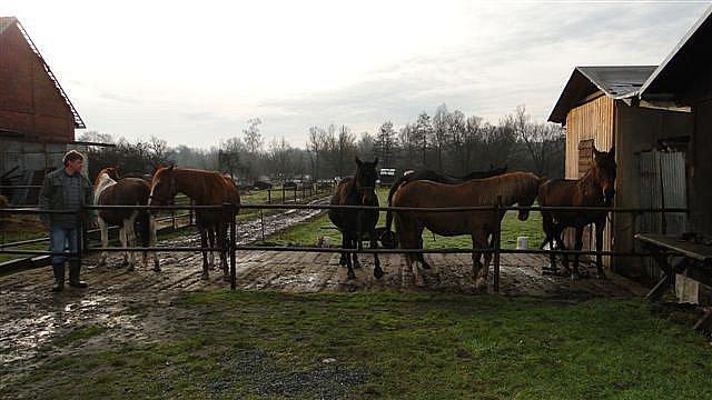 Hasiči zachránili osm koní ze zaplavené louky v Blešně (16. ledna 2011).