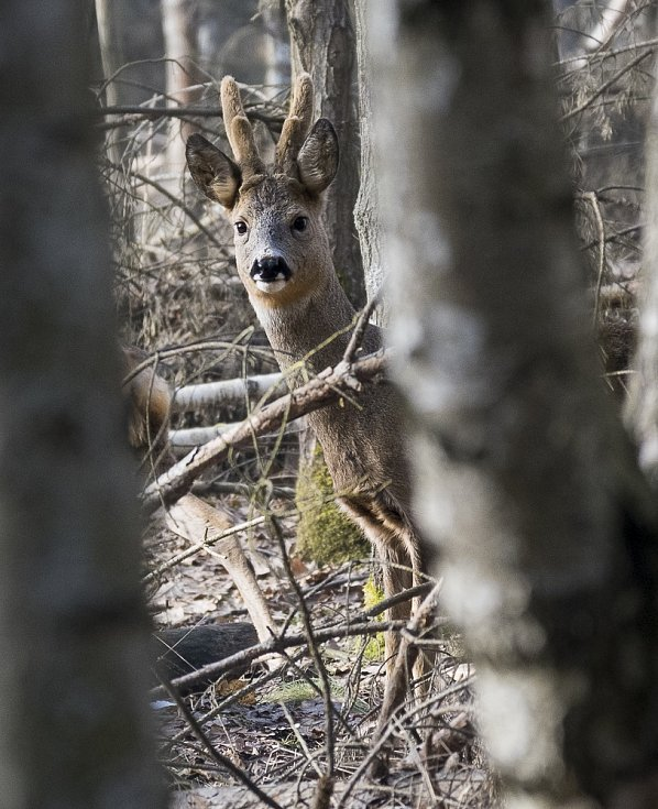 Les ukrývá víc, než si myslíte.
