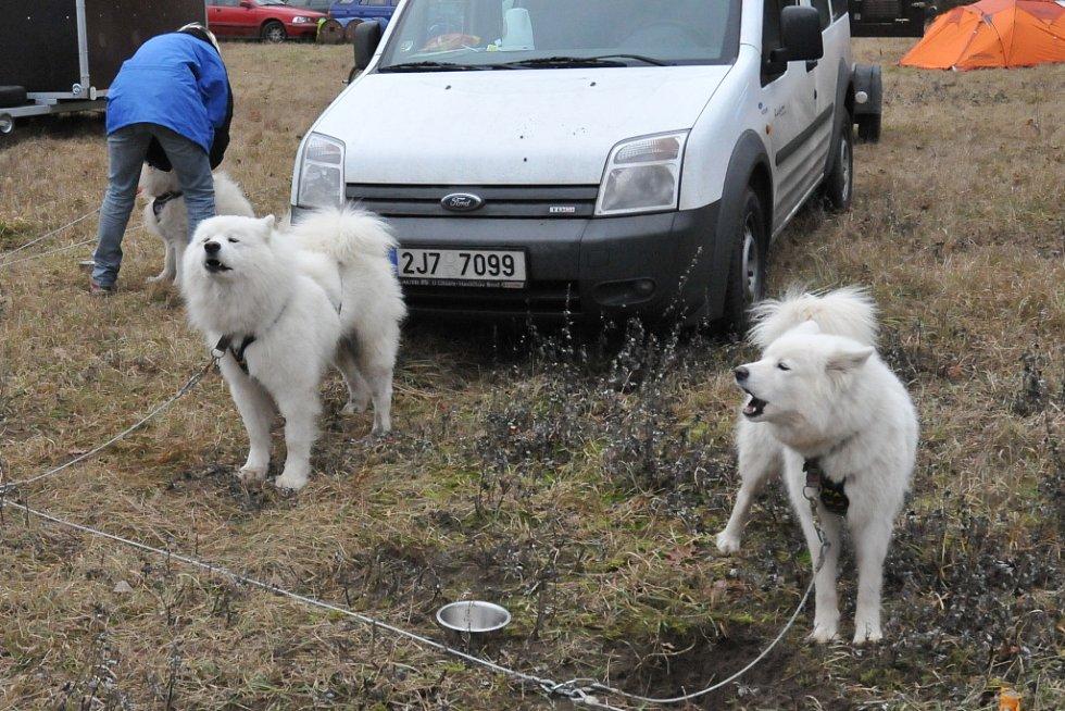 Závody psích spřežení v Bělči.