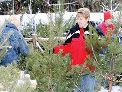 V hájovně U Zeleného sloupku na Novém Hradci Králové začali lesníci stromky z výchovných zásahů z okolních lesů nabízet poprvé v pátek. Budou je prodávat do vyprodání zásob.