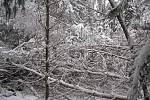 Novohradským lesům kvanta sněhu spadlá v průběhu ledna hodně ublížila. Nejvíce zasaženy jsou mladé porosty.