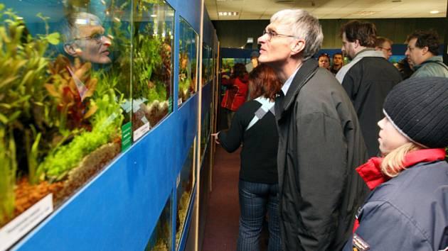 Výstava akvarijních ryb v hradeckém Aldisu