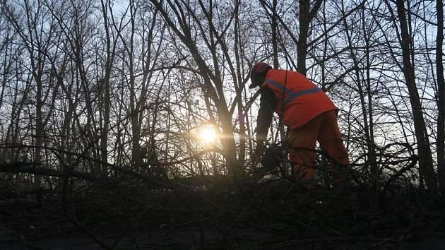 Odstraňování stromů z okolí Malšovického stadionu.