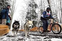 HRADECKÝ MID, závody psích spřežení na středních tratích a ve sprintu v lesích nedaleko Bělče nad Orlicí (listopad 2010).
