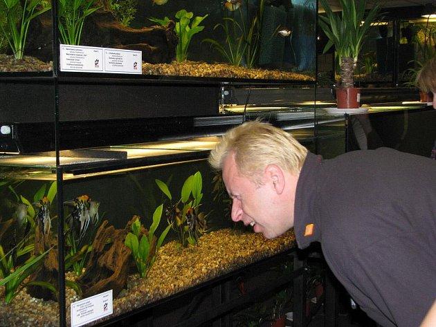 Výstava akvarijních rybek v Aldisu.
