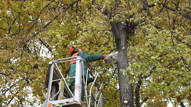 Kácení stromů V Lipkách (25. října 2010).