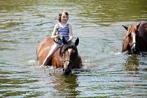 Plavení koňů v řece Orlici na Hradecku.