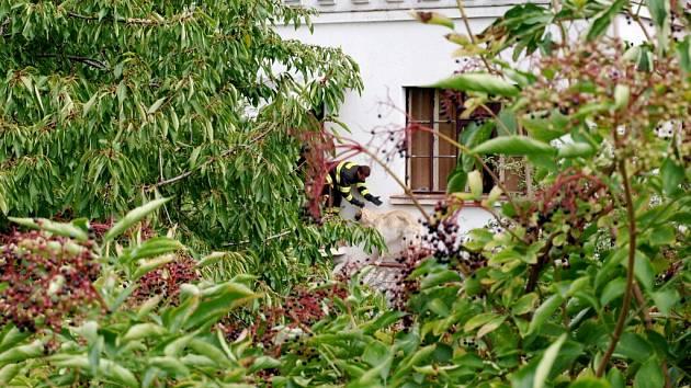 Záchrana psa z římsy domu v Novém Bydžově.