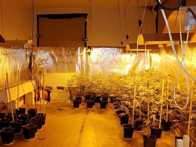 Odhalená pěstírna marihuany v Klášterci nad Orlicí.