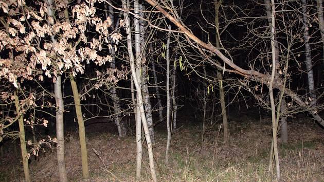 Vrah se pokusil o sebevraždu v lese nedaleko mezi Libřicemi a obcí Nový Ples.