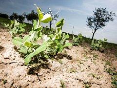 Období sucha trápí i zahrádkáře.