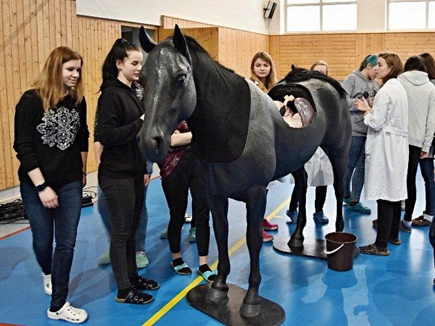 Milionový kůň pro budoucí veterináře.