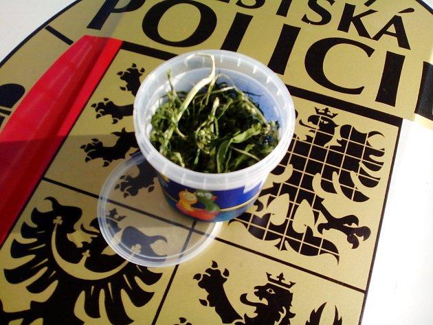 Strážníky zajištěná marihuana.
