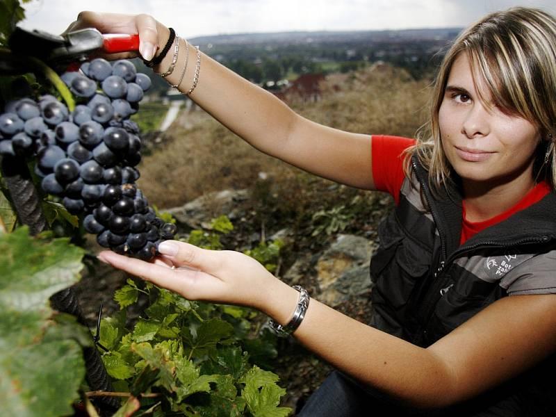 I majitel několika stovek keřů vinné révy má s jejím pěstováním a výrobou vína spoustu práce a starostí, byť radosti samozřejmě převažují