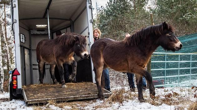 Divocí koně na hradecké Plachtě.