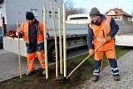 Technické služby zahájí podzimní výsadbu stromů.
