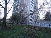 Pád stromu v hradecké ulici Jungmannova.
