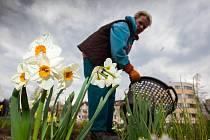 Jaro a květiny ve městě.