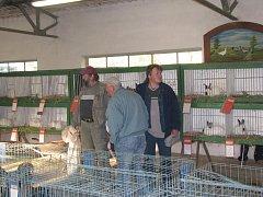 Prodejní výstava chovatelů v Chlumci nad Cidlinou.
