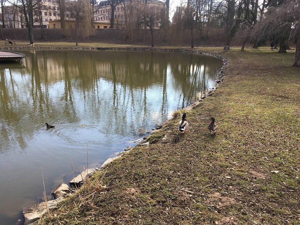 Na procházce v Šimkových sadech.