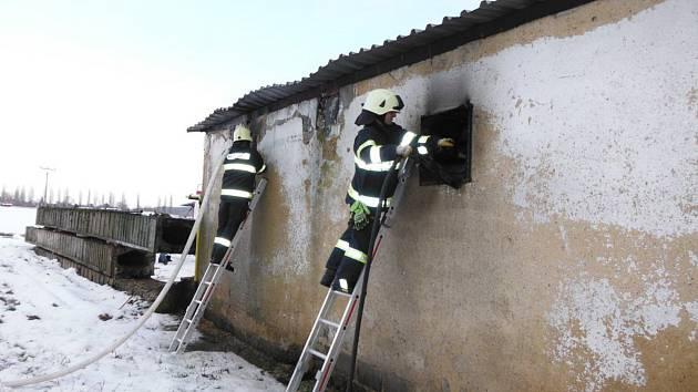 Při požáru nebyl nikdo zraněn, v hale se nenacházela ani žádná zvířata.