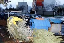 Odhozené vánoční stromky v ulicích Hradce Králové.