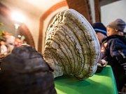 Výstava Houby živé, jedlé i jedovaté v hradeckém Muzeu východních Čech.
