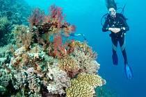 Mladá potápěčka Denisa Lhotová z Hořic v akci.