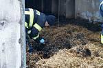 V Hlušicích uhynulo v hořící hale asi 3500 kachňat.