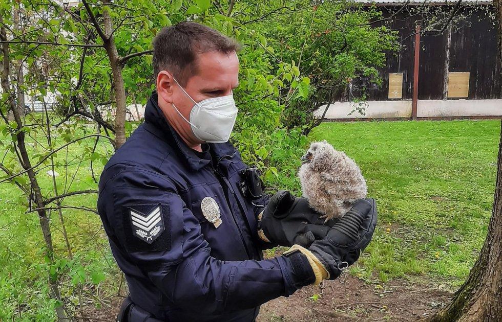 Strážníci pomohli dětem zachránit mládě sovy