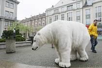 Aktivisté z hnutí Greenpeace a lední medvěd Paula na pěší zóně v Hradci Králové.