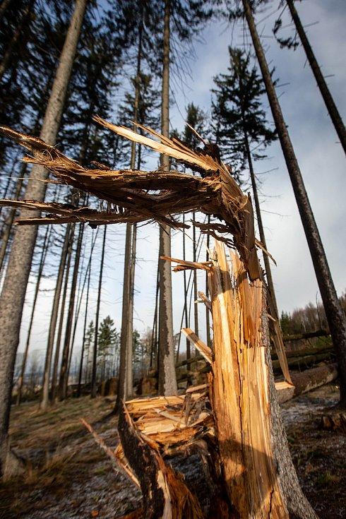 Likvidace škod a následků orkánu Sabine na Královéhradecku.