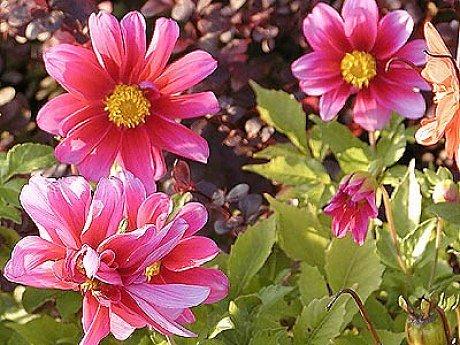 Květina pro radost
