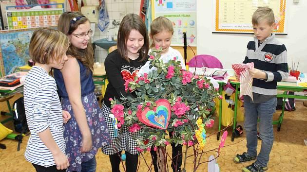 Láskovník pro Austrálii vypěstovali žáci z Předměřic.