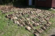Skoro pět stovek bažantů zabila dvojice psů v polovině týdne na Hradecku.