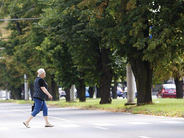 Stromy ve Střelecké ulici v Hradci Králové.