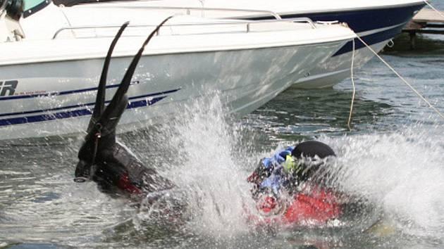 Na Správčickém rybníku u Hradce cvičila potápěčská skupina Hasičského záchranného sboru Královéhradeckého kraje.