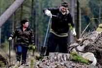 Zalesňovací práce v hradeckých městských lesích.
