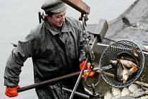 Kapří násada z rybníku v Kosičkách, který vylovili chlumečtí rybáři, putovala do nového domova. Tím se pro bezmála sto metráků ryb stal Žehuňský rybník.