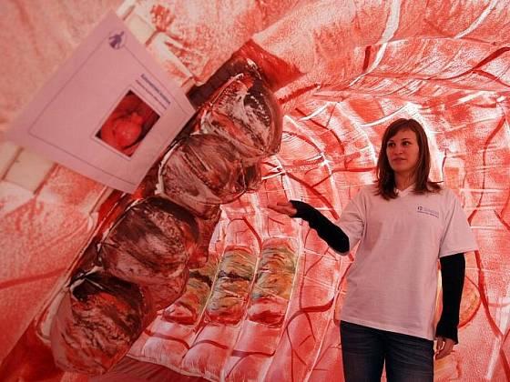 Zastavit hrozivý nárůst rakoviny konečníku a tlustého střeva, informovat  o důležitosti prevence a včasné léčby.  Takové ambice má projekt  Zastavme kolorektální karcinom, který odborníci představili 30.října  v Hradci Králové