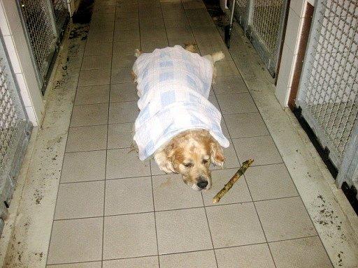 Pes v nebezpečí vlivem vysokých teplot.