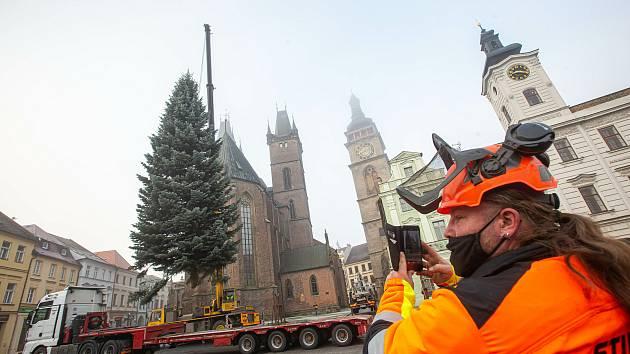 Kácení a převoz vánočního stormu na náměsti v Hradci Králové