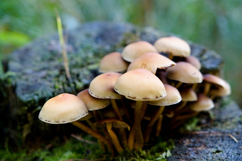 První mistrovství ve sběru hub v hradeckých lesích