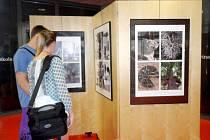 Z nábřeží do knihovny - výstava v hradecké Galerii Automat.