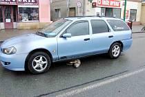 Osobní autoomobil po střetu se srnou na Klicperově náměstí v Chlumci nad Cidlinou.