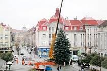 Usazování vánočního stromu na hradeckém Masarykově náměstí.